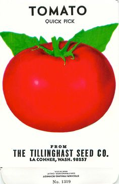 Tomato seed packet (Old seed packet from Tillinghast Seed Company; La Conner, WA). My great great grand uncle's seed company!