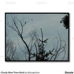 Cloudy Skies Trees Birds Postcard
