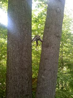 Found a raccoon in this exact position - Imgur