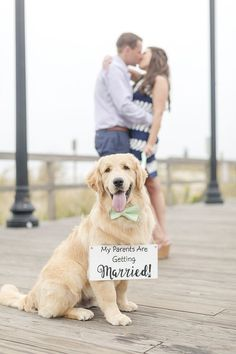 Golden Retriever wearing bow tie and sign, dog friendly engagement pictures on boardwalk ©️️️️Anna Grace Photography, Bethany Beach, DE #Goldenretriever #enagementphotowithdog #dogfriendlyphotography