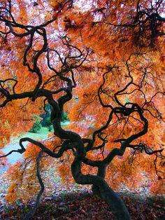 Tree Silhouette in Autumn - ©Stanley Zimny