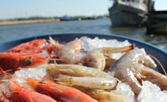 OH, THE TASTE OF GULF SHRIMP! What makes wild-caught shrimp taste so good? Plain and simple, it's all about the nutrient-rich waters of the Gulf of Mexico. Florida Vacation, Great Recipes, Delicious Recipes, Oysters, Health Benefits, The Best, Meal Prep, Shrimp, Seafood