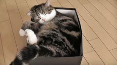 Echte slaapkoppen, die katten! | newsmonkey