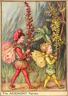 The Agrimony Fairies - Flower Fairies of the Wayside