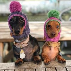 Cute dachshunds in hats