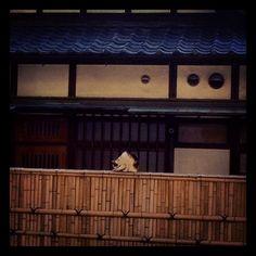 日本家屋に三毛猫。 - @blaue_fuchs- #webstagram