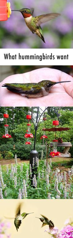 What hummingbirds want