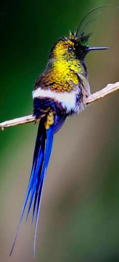 Hummingbird via Paradise of Birds on Facebook