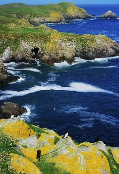 Saltee Islands, Co Wexford, Ireland I've been told my mother's family came to the US from County Wexford.
