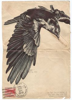 The raven flies | totem | Pinterest | Ravens, Crows and Crows ravens