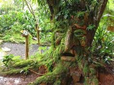 Discover Bichacue Yath Arte & Naturaleza in Cali, Colombia: A magical world of elves and fairies tucked amongst the trees in Colombia. Cali Colombia, Elves And Fairies, Fauna, Mythical Creatures, Garden Bridge, Places To See, Fairy Tales, How Are You Feeling, Outdoor Structures