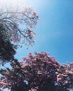 rose + azul ✨ #intimasdaray #ootd