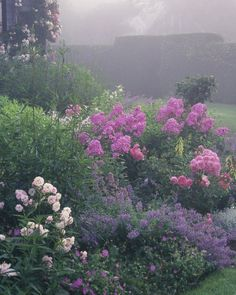 Morning haze heightens the pinks of several roses, including the pale 'Bonica' and the darker 'Royal Bonica,' both disease-free, prolific bloomers; pale-pink 'Bright Eyes' phlox; and, at center stage, hot-pink 'Eva Cullum' phlox. Purple catmint, yellow Phygelius, and silvery Cerastium add contrast and variety.