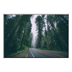 "Road through the Redwoods, Del Norte Coast Redwoods, California (24""W x 16""H x 0.4""D)"