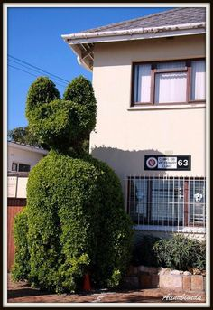 Meow - A Giant Cat Topiary