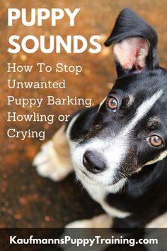 If your puppy's barking has become a problem, here are some tips to help you decipher the different sounds your puppy makes and figure out what they mean. In addition to that, here are all the tools necessary to stop unwanted puppy barking, regardless of the reason for it. Read at kaufmannspuppytraining.com @KaufmannsPuppy