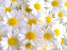 Daisies ...The earth laughs in flowers, Ralph Waldo Emerson ...
