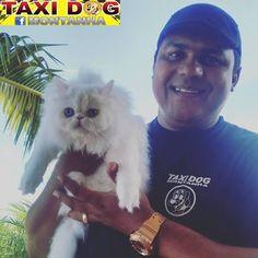 TAXI DOG MONTANHA TRANSPORTE DE ANIMAIS NO RIO DE JANEIRO: Chanel (Gatinha Persa)Da TamCargo no Galeão para o...