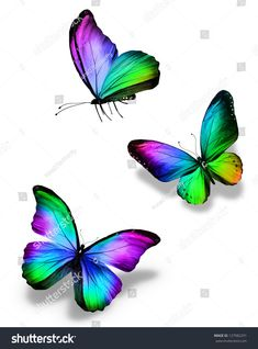 Three color butterflies, isolated on white - Millions of Creative Stock Photos, Vectors, Videos and Music Files For Your Inspiration and Projects. Colorful Butterfly Tattoo, Rainbow Butterfly, Butterfly Drawing, Butterfly Pictures, Butterfly Painting, Butterfly Wallpaper, Purple Butterfly, Watercolor Butterfly Tattoo, Whats Wallpaper