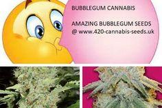 Bubblegum Cannabis