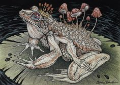 Caitlin Hackett frog illustration. #awesome #art