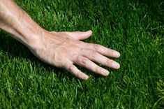 Do you want to know how to get greener grass without super-sizing your water bill? Easy lawn care tips for green grass.