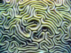 Coral Topography | Corals and Sponges