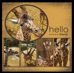 Scrapbooking Layout simple - Giraffe Zoo Vacation Scrapbook, Disney Scrapbook Pages, Scrapbook Paper Crafts, Scrapbook Cards, Scrapbook Photos, Wedding Scrapbook, Scrapbook Albums, Scrapbook Designs, Scrapbook Sketches