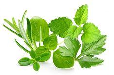 Vetésnaptár - Fűszernövények vetési ideje - gazigazito.hu Plant Leaves, Plants, Gardening, Lawn And Garden, Plant, Planets, Horticulture