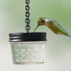 drill holes into a piece of plastic and insert into the lid of a small canning jar . Homemade Hummingbird Feeder, Hummingbird Food, Homemade Bird Feeders, Hummingbird Garden, Glass Hummingbird Feeders, Hummingbird Flowers, Bird Feeder Craft, Garden Bird Feeders, Garden Birds