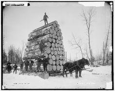 Couper des gros arbres