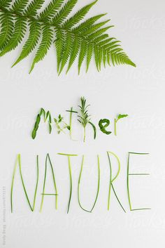 Kirsty Begg for Stocksy United | chives, copy space, fern, flat lay, flora, font, frond, green, herb, leaf, letters, mother nature, natural, nature, on white, plant, typography, word