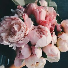 Immagine di flowers, pink, and rose