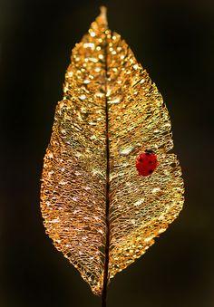 Ruby and gold (ladybug on a leaf skeleton)