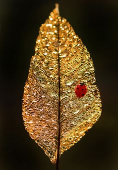 Ruby and gold (ladybug on a leaf skeleton)