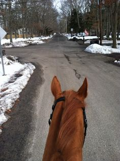 Think all #OTTB's are crazy? Check out New York Racing Association's Maggie Wolfendale's off-the-track Thoroughbred Star enjoying some road time on a chilly morning!