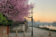 Where to See Magnolia and Cherry Blossom in London (Printable Guide and Map) Sunrise City, Sunrise Mountain, Sunrise Photography, London Photography, Nature Photography, Sunrise Drawing, Sunrise Painting, Richmond London