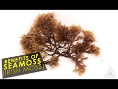 Subscribe for FREE http://goo.gl/pjACXH Health Benefits Of Seamoss (Irish Moss) | Best Health And Food Tips