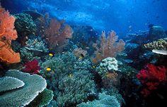 raja ampat -- west papua -- indonesia Raja Ampat Islands, Scary Animals, Photo Voyage, Komodo Island, West Papua, Kings Island, Underwater World, Underwater Images, Island Beach