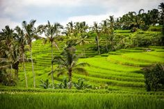 Bali Travel Guide: Things To Do In Paradise