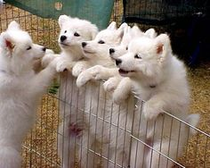 Hey- hey-hey. You're on the outs. Run and grab us some organic gluten free doggie treats! Www.boneyardbakery.net