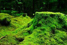 Foresta, Muschio, Norvegia