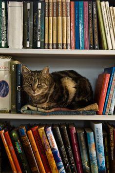 Literature Cat