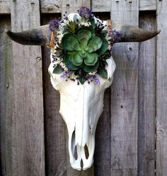 << RE-PURPOSED COW SKULL >> Our cow skull wall hangings pay homage to the animal by providing an alternative resting place for an object that is typ