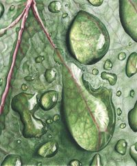 Raindrops... colored pencil drawing by Dee Overly  I'm always impressed with how realistic pencil drawings can be.