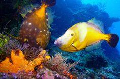 Cozumel Reef National Park http://thingstodo.viator.com/cancun/cozumel-reef-national-park/