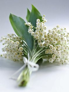 Nothing says Spring more than the sweet scent of Lily of the Valley.