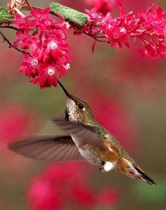Beautiful hummingbird posted by Jan Jansen on google+