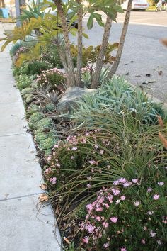 Hell strip plantings don't have to be boring | Flickr - Photo Sharing!