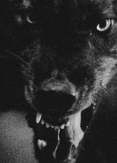 """Would you offer your throat to the wolf with the red rose.I bet you say that to all the boys! Teen Wolf, Wolf Hybrid, Big Bad Wolf, Witch House, My Demons, Sirius Black, Red Riding Hood, Dragon Age, Doberman Pinscher"